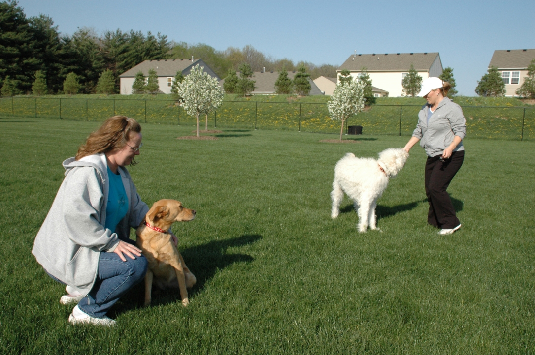 Dog Training Classes Noblesville In