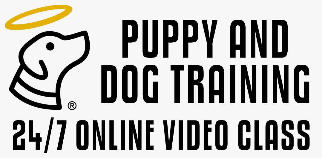 Enroll in Video Dog Training Class