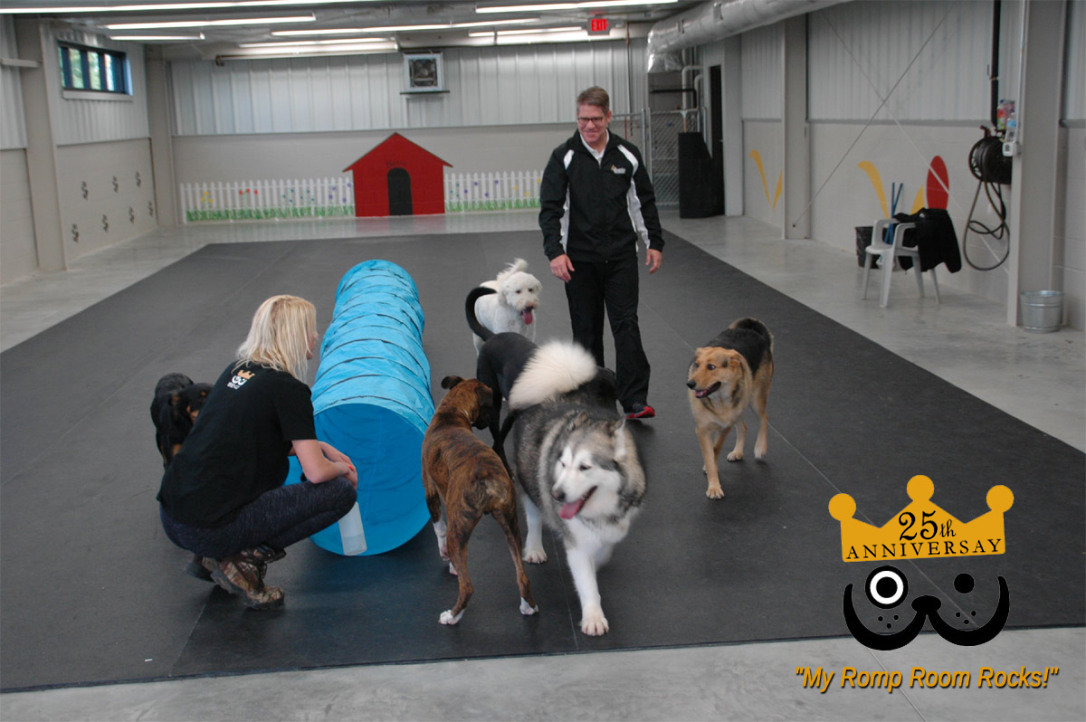 Dog Daycare Romp Room Interior